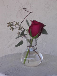simple rose in a vase