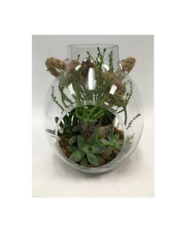 Succulent Gardens Delivery Belleville On Live Love And Laugh