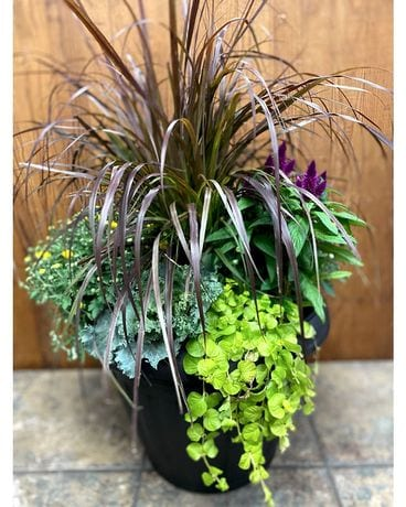 Outdoor Fall Planter Plant