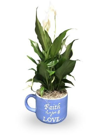 Faith Hope Love - Peace Lily Plant