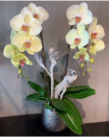 ROSH-ORCHIDS Flower Arrangement