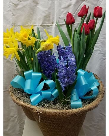 Basket of Blooming Bulb Plants Plant