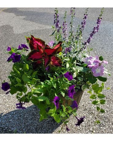 Patio Planter - Ruthie's Choice Plant