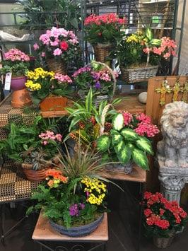 In Bloom Flowers 1378 W. Main Street Lewisville TX 75067