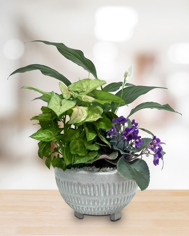 Melody Planter Plant
