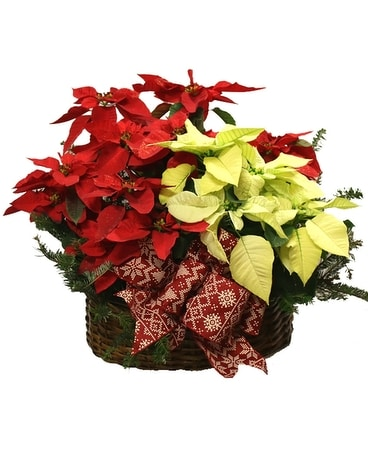 Poinsettia Multi-Basket Flower Arrangement