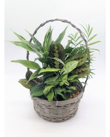 House Plant Basket Plant