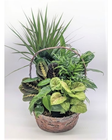 Large House Plant Basket Plant