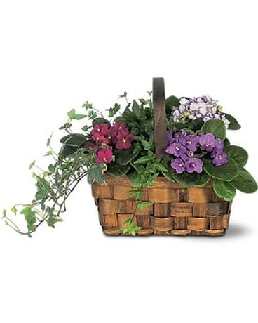 Mixed African Violet Basket Flower Arrangement