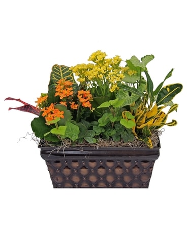 Delightful Plant Assortment Dish Garden Plant