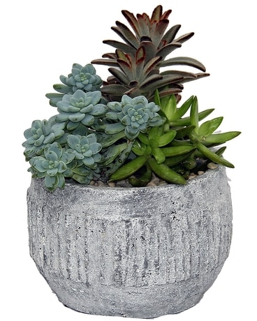 Succulent Gardens Flower Arrangement
