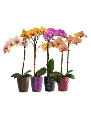 Colorful Phalanopsis Orchids Flower Arrangement