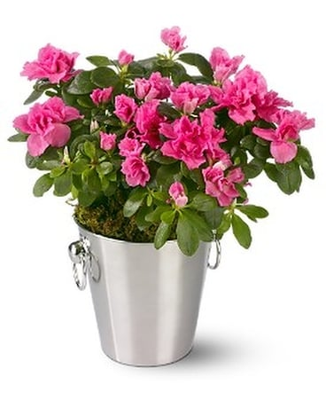Adorable Azalea Flower Arrangement