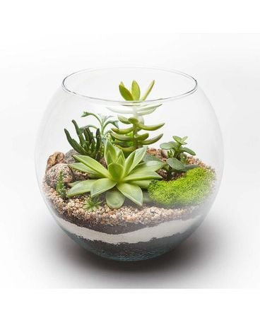 Succulent garden in glass Plant