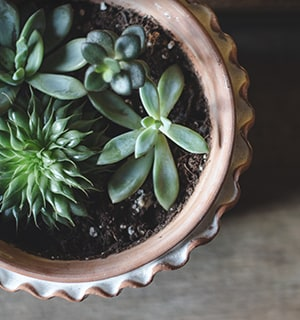 click to explore our plants and succulent products