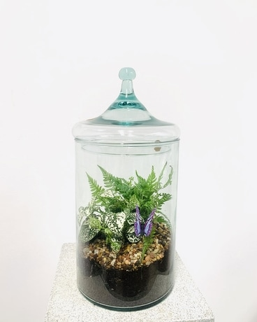 Terrarium Tower Plant