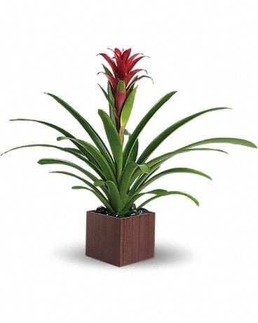 Teleflora's Bromeliad Beauty Flower Arrangement