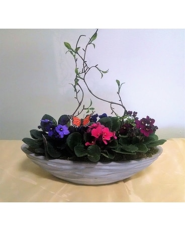 Sympathy plants delivery comstock park mi alpine floral gifts inc floating violets negle Choice Image