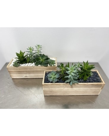 Wood Succulent Box