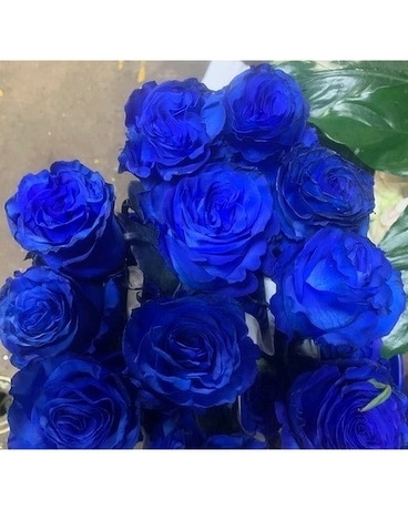DOZ BLUE ROSES Flower Arrangement