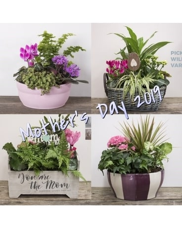 Mother's Day Pre Order Dish Garden Plant