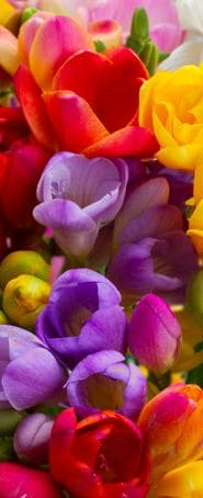 colorful spring and summer flowers closeup