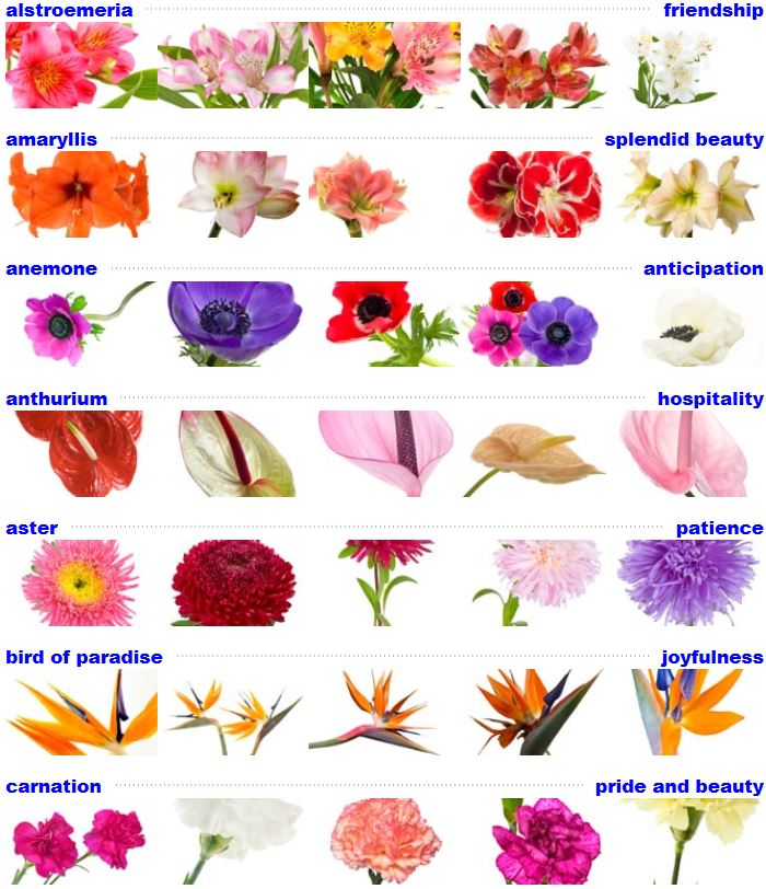 Flower Meanings: The Meaning Of Flowers I Marine Florists I 1995 Flatbush