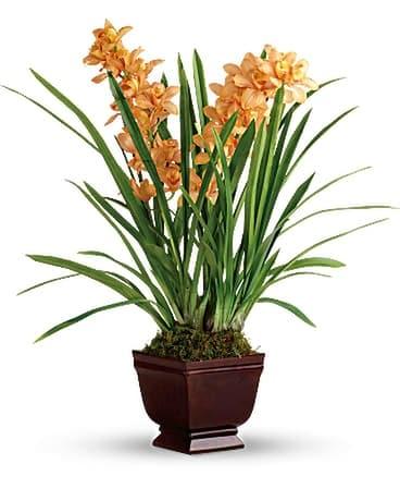 Quick View Teleflora S Regally Yours Orchid Flower Arrangement