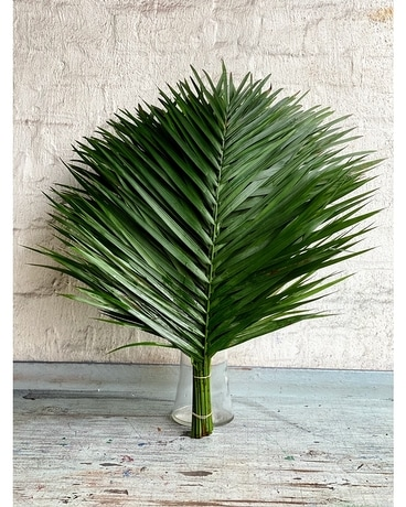 Terrific TeePee Palm Bundle