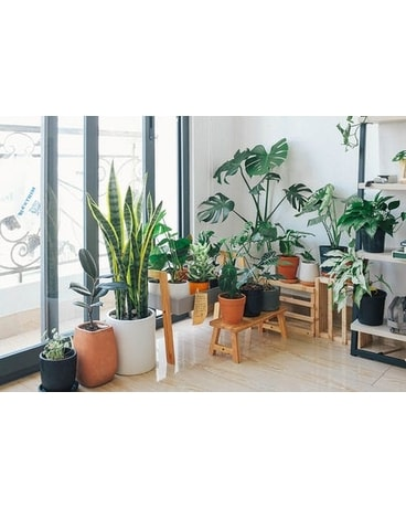 Designers Choice Green Plant Plant