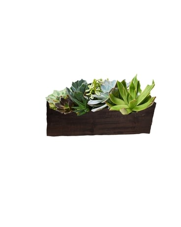 Magic Box of Succulent Dish Garden Plant