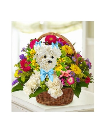 Poodle in Blue Flower Arrangement