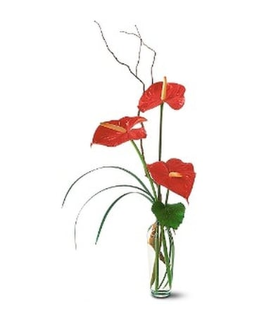 The Simplicity of Anthuriums Flower Arrangement