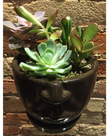 Face Pot Succulent Garden