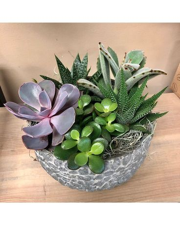 Pebble Pot Succulent Garden Plant
