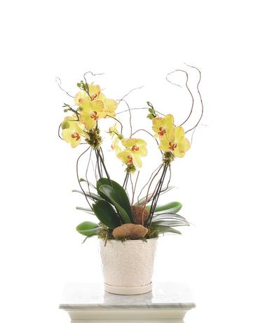 Novelty Orchid Plant Flower Arrangement