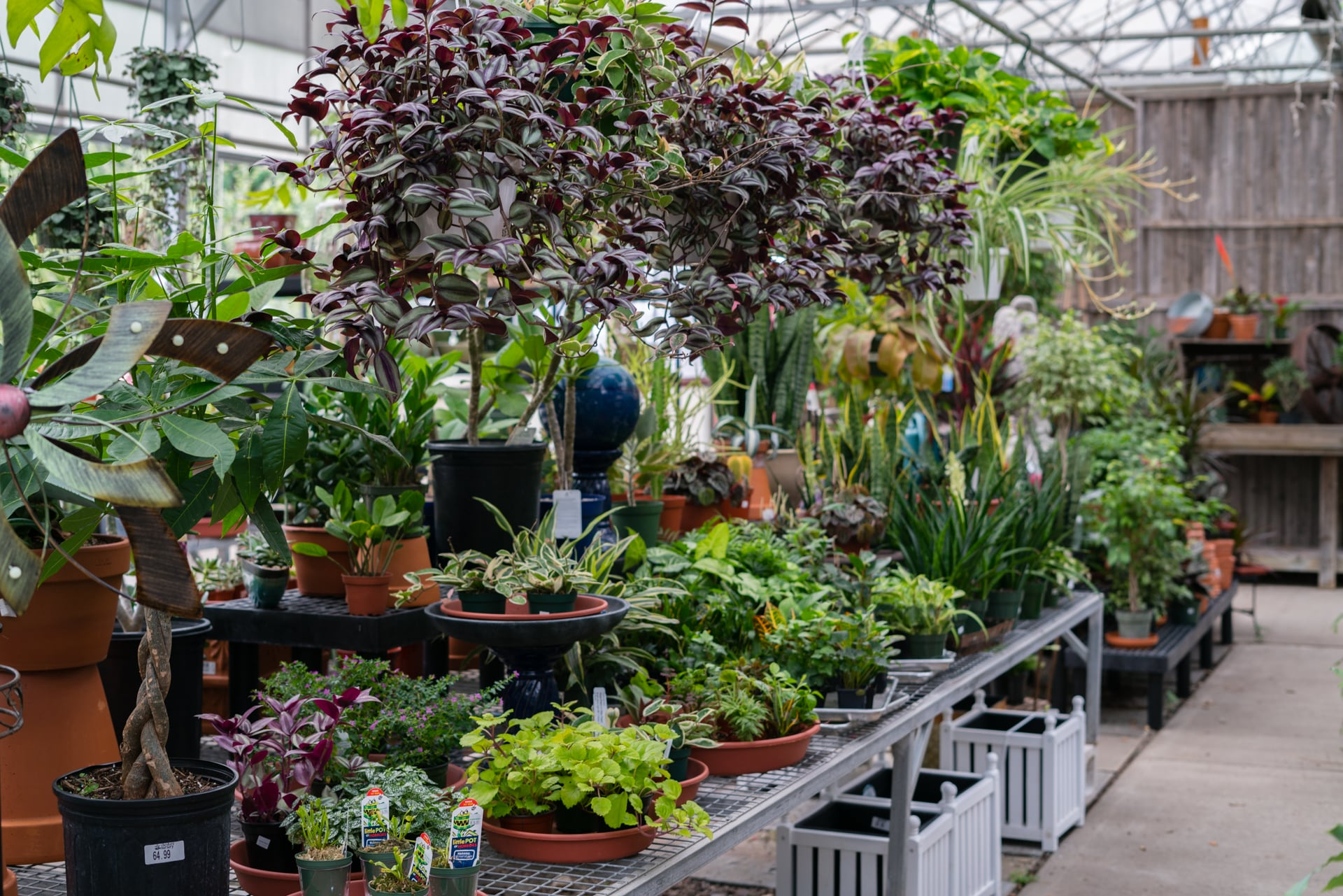 Fresh Stock Of Houseplants Arriving Weekly