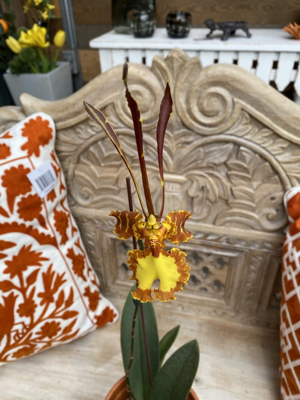 Sturtz and Copeland Orchid Gallery