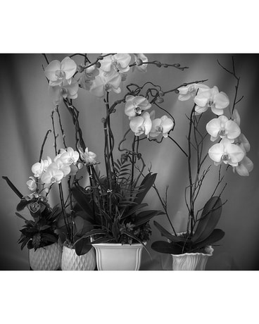 Custom Orchid Planters Plant
