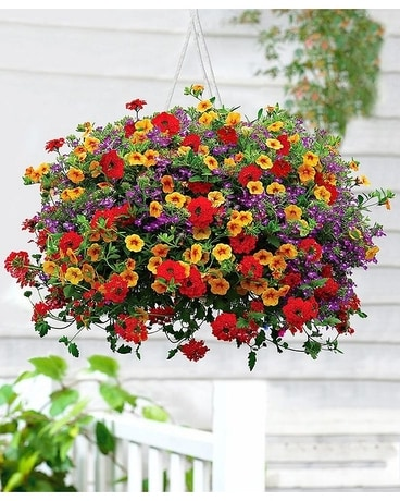 Summer Hanging Basket Plant