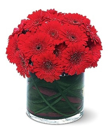 Red Gerbera Collection - by Petals On The Trail Flower Arrangement