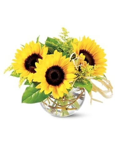 Telefloras sassy sunflowers by whites flowers in calgary ab telefloras sassy sunflowers by whites flowers flower arrangement mightylinksfo