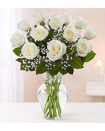 Conroys flowers local el cajon ca florists same day delivery san quick view rose elegance dozen premium long stem white roses mightylinksfo