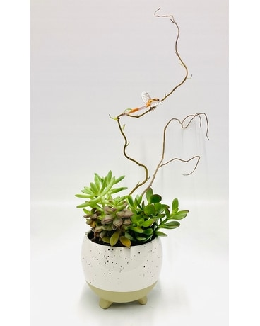 Succulant Zen Flower Arrangement