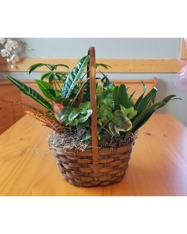 6in Basket Garden Plant