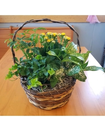 8in Euro Basket Garden Plant