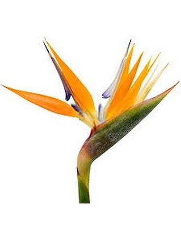 82caa0efa85 Anniversary Flowers Delivery Santa Rosa CA - Grohe Florist's Santa ...
