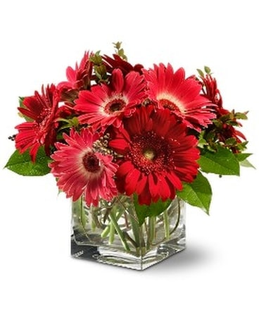 Teleflora's Gorgeous Gerberas Flower Arrangement