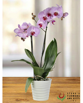 Rare and Radiant Orchid Plant Plant