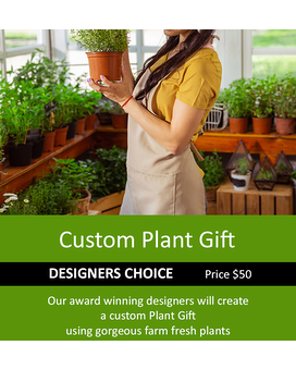 Designer's Choice Single Green Plant 50 Plant